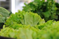 bioemozioni negozio biologico in provincia di treviso verdura