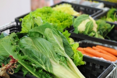 verdura bio fresca